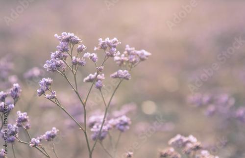 Flower - 125970147