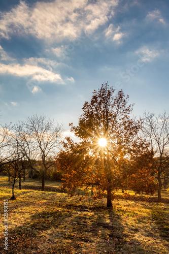 pogodny-jesienny-wieczor-krajobraz-z-kolorowym-tre