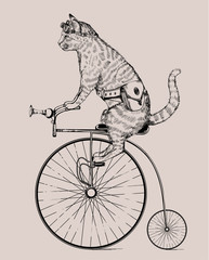 steampunk cat on retro bicycle with bag and glasses, in etching style, isolated