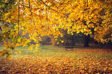 Colorful autumn park on sunny morning in Krakow, Poland