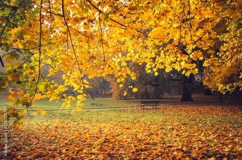 Poster Honing Colorful autumn park on sunny morning in Krakow, Poland