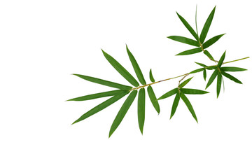 Bamboo plant green leaves isolated on white background, clipping