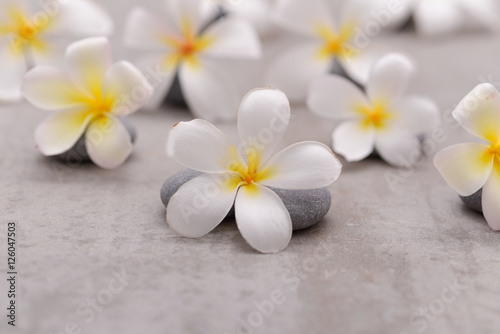 Poster Spa Spa stone with frangipani on grey background.