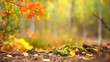 Autumn sunny forest background. Beautiful fall scene. Blurred abstract nature background. Full HD 1080p