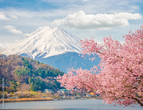 Poster Mountain Fuji in spring ,Cherry blossom Sakura