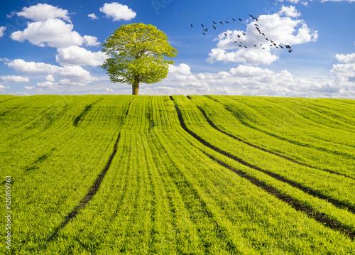 ecological, green field, blue sky, flying birds