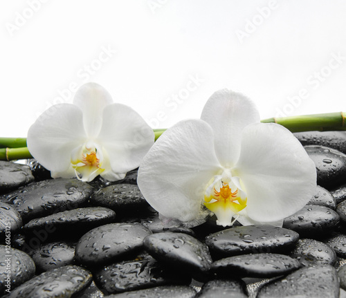 Tuinposter Spa Two White orchid blossom with black stones ,grove on wet background