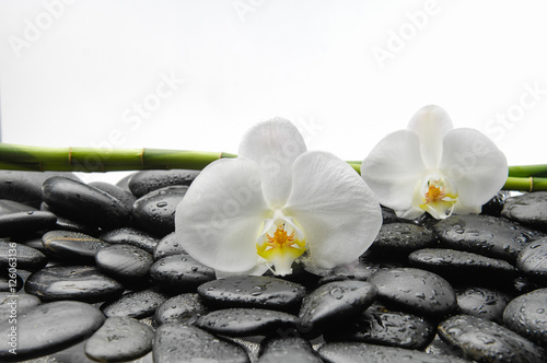Fotobehang Spa White orchid with black stones ,grove on wet background