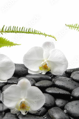 Poster Spa White orchid blossom with black stones ,ferm on wet background