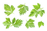 Parsley leaf isolated on white. Closeup - 126078941