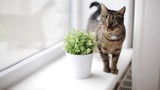 cat on window sill at home