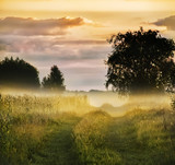 dirt road among meadows and trees in the morning mist. Beautiful soft morning landscape.