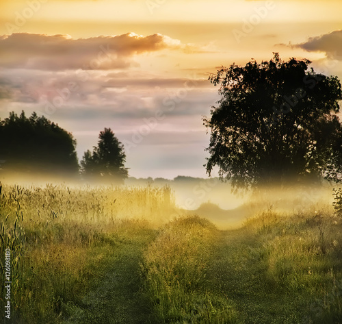 Poster dirt road among meadows and trees in the morning mist