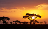 Typical african sunset with acacia trees in Masai Mara, Kenya - 126105161