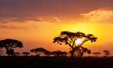 Typowy afrykański zachód słońca z akacji w Masai Mara, Kenii