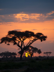 Typical african sunset with acacia trees in Masai Mara, Kenya. V