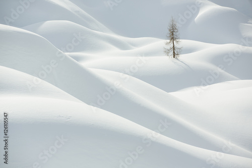 Beautiful snow covered hills with pine tree, winter landscape Poster