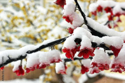 Flowers of artificial tree covered in snow. Christmas theme Poster