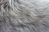 gray fluffy fur with long pile texture for background - 126125787
