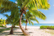 Palm trees on the beach at Praslin island, Seychelles