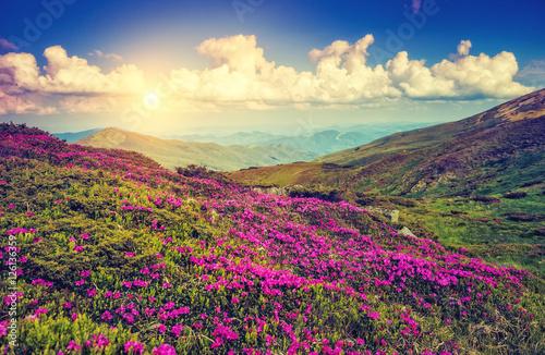 Fantastic pink flowers