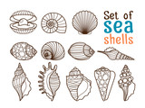 Vector sea shell or marine shells line icons set on white background