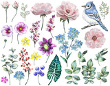 Set watercolor elements of rose, collection garden and wild flowers, leaves, branches flowers, illustration isolated on white background, eucalyptus, bird, blue jay, bud, me-nots, exotic leaf, berry - 126223361
