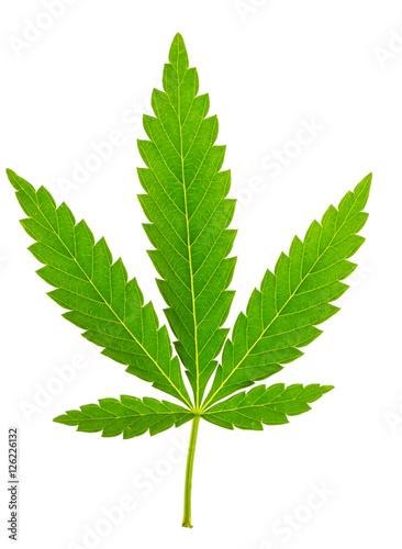 Fotobehang Planten Marijuana leaf isolated