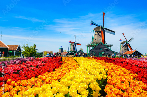 Poster Landscape with tulips in Zaanse Schans, Netherlands, Europe