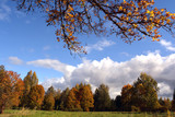 Clouds  over yellow maple trees on sunny autumn day