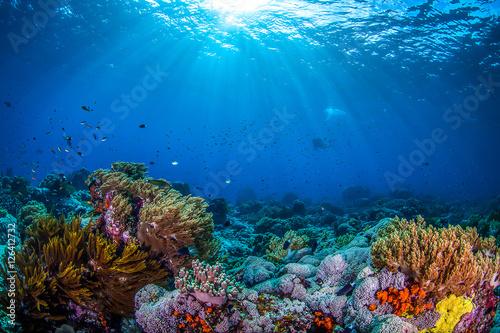 Ocean life, ocean fish and coral underwater