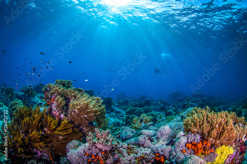 Poster Ocean life, ocean fish and coral underwater