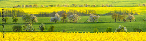 Keuken foto achterwand Geel Zielone łany młodego zboża na wiosennym polu