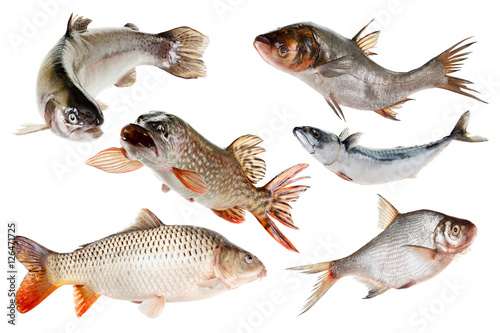 Poszter Set fishes. Isolated on white.