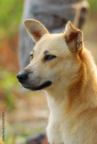 Poster A very trustworthy dog in a prawn farm