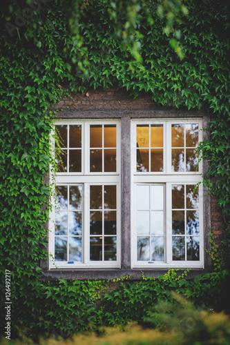 Poster Window hidden in green ivy.