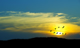 Birds flying against blue evening sunset environment or ecology - 126510121