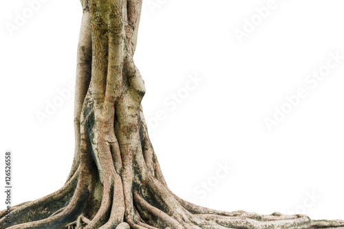 korzenie-drzewa-samodzielnie-na-bialym-tle-to-ma-sciezke-obcinania