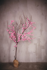 blossoming pink sacura tree