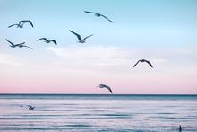 Grand groupe troupeau de mouettes sur l'eau du lac de la mer et de voler dans le ciel sur le coucher du soleil d'été, tonique avec des filtres instagram rétro hipster, effet de film