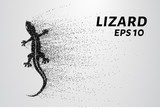 Lizard of particles. The lizard consists of small circles and dots.