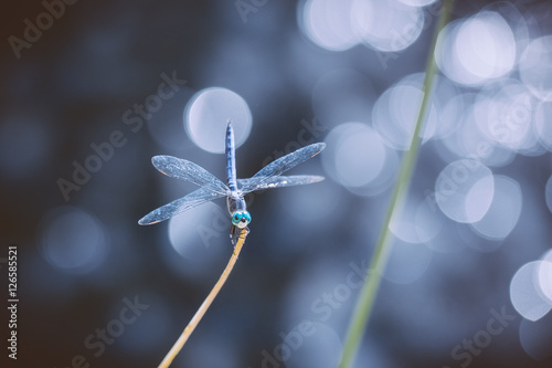 Poster Chocoladebruin Dragonfly sitting on a plant stem bokeh