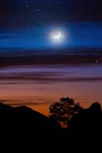 silhouette d'arbre entre les collines sous le ciel de la nuit et la lune