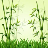 Bamboo background with grass