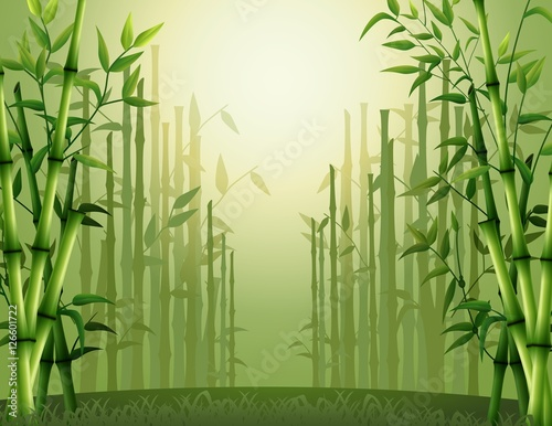 Green bamboo trees background inside the forest