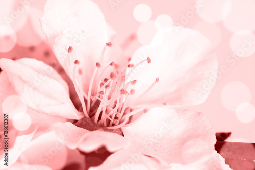 Floral motif wallpaper, Beautiful spring flowers blossom. Plakát