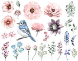 Set vintage watercolor elements of rose, collection garden and wild flowers, leaves, branches flowers, illustration isolated, eucalyptus, bird - blue jay, feathers, berry, me-nots, herbs - 126664327