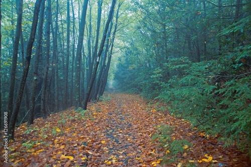 Spooky Foggy Autumn Woods