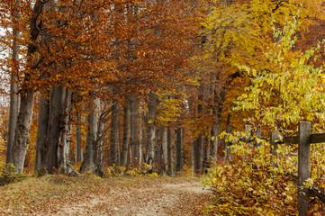Road to Autumn