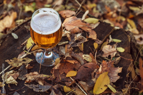 Beer in autumn forest Poster